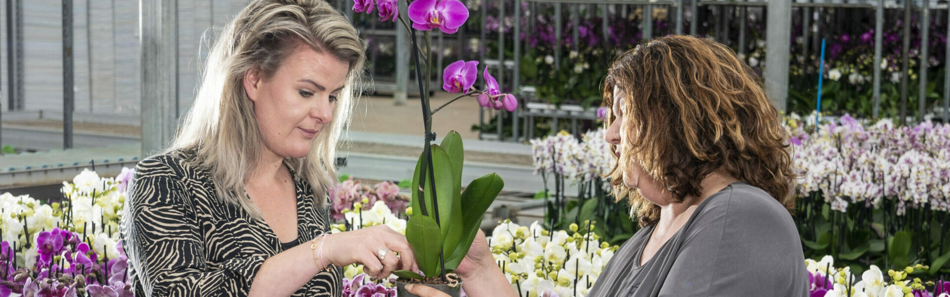 De toekomst van de orchideeënteelt